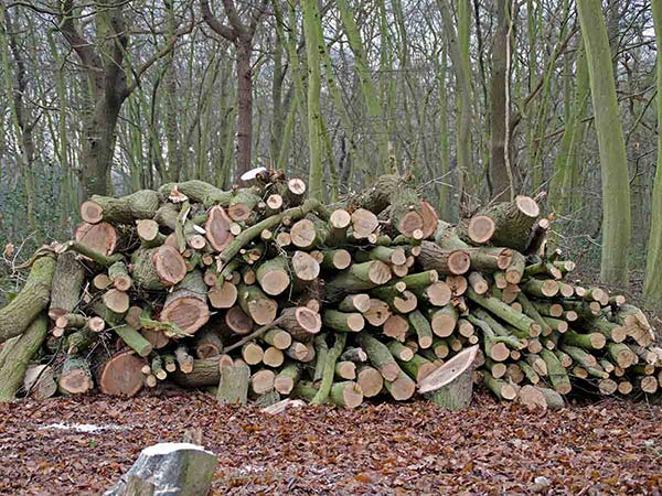 Cord of logs stacked